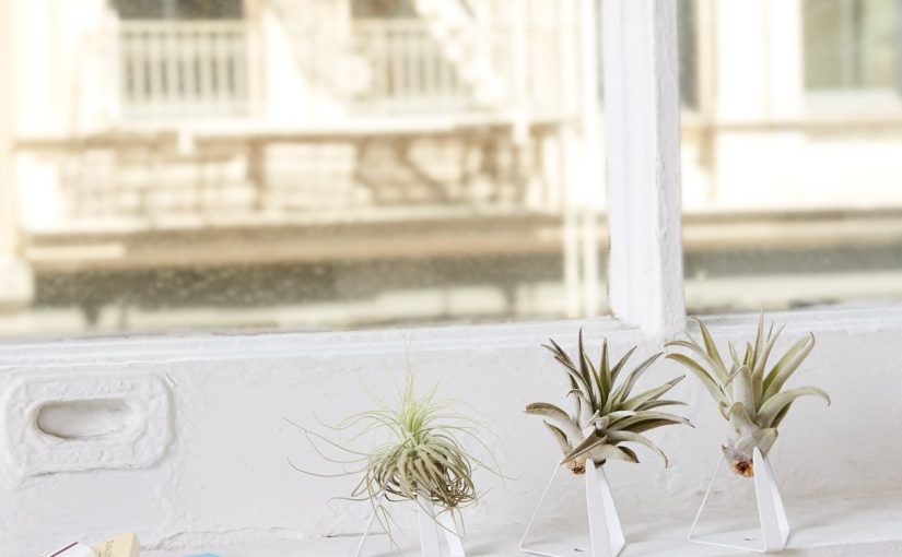 Top 5 Houseplants forBeginners
