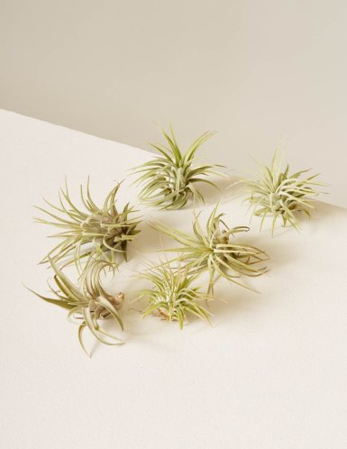 the-sill_airplants-assorted_6_1200x.progressive.jpg